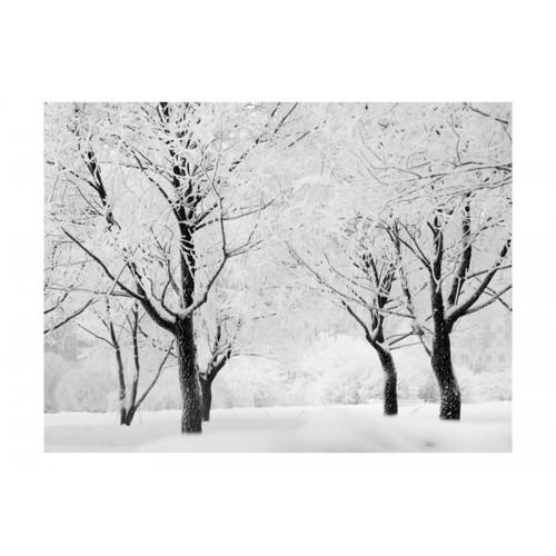 Fotomurale - Alberi - paesaggio invernale - Quadri e decorazioni