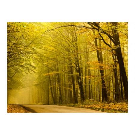 Fotomurale - Strada nella foresta d'autunno - Quadri e decorazioni