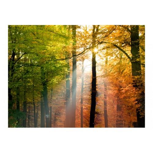 Fotomurale - Bell'autunno - Quadri e decorazioni