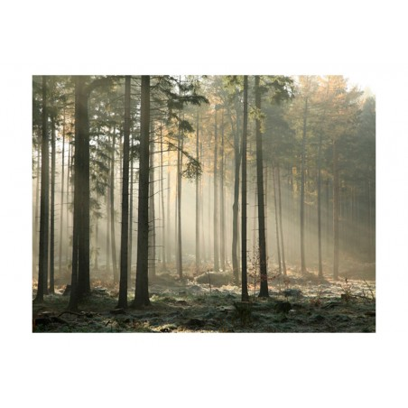 Fotomurale - Foggy November morning - Quadri e decorazioni