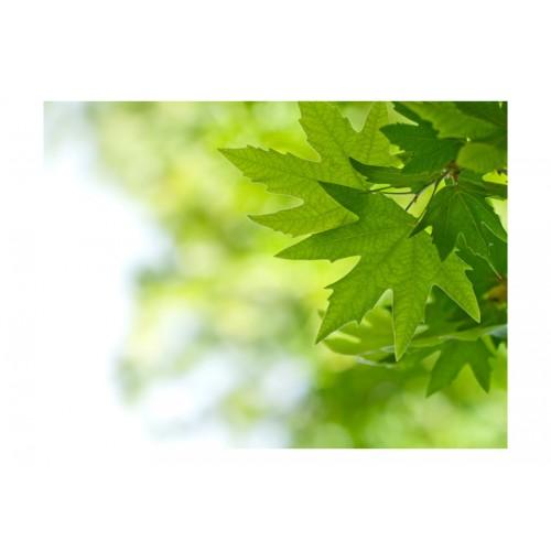 Fotomurale - foglie (Shallow focus) - Quadri e decorazioni
