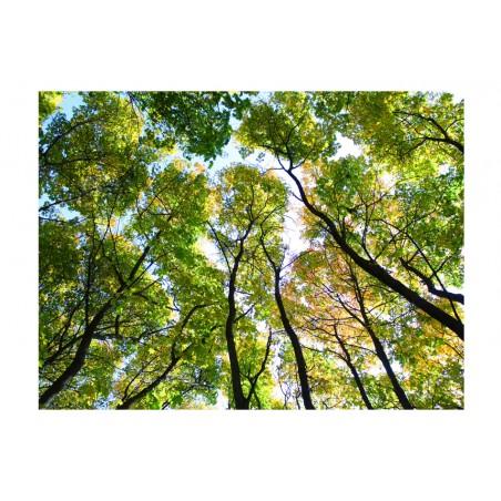 Fotomurale - Looking up at the trees - Quadri e decorazioni