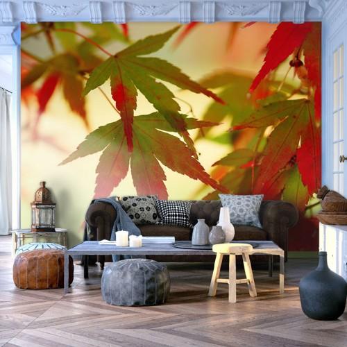 Fotomurale - Foglie dai colori autunnali - Quadri e decorazioni