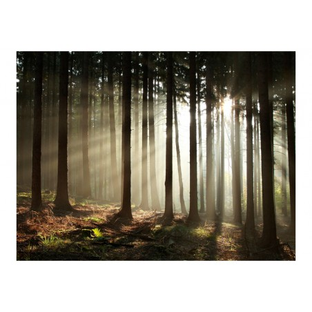 Fotomurale - Foresta di conifere al mattino - Quadri e decorazioni