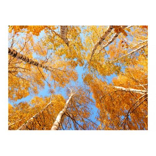 Fotomurale - Chiome autunnali degli alberi - Quadri e decorazioni