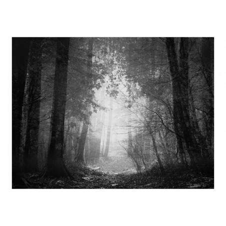 Fotomurale - Foresta delle ombre - Quadri e decorazioni