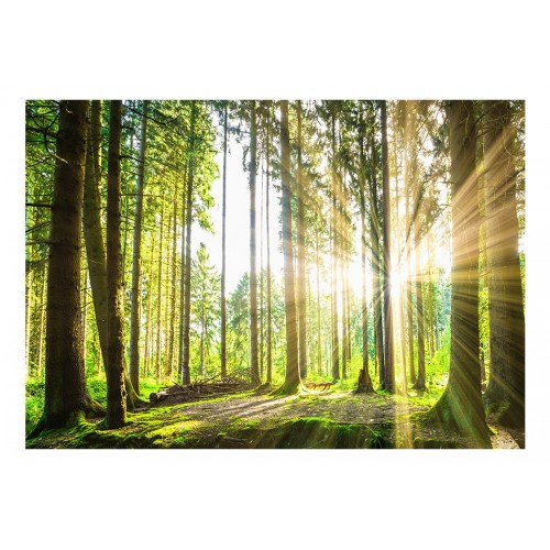 Fotomurale - Forest Tales - Quadri e decorazioni