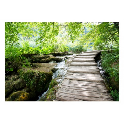 Fotomurale - Sentiero nel bosco - Quadri e decorazioni