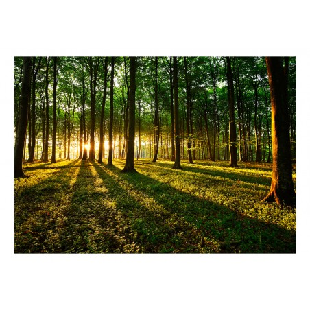 Fotomurale - Primavera: mattinata nella foresta - Quadri e decorazioni