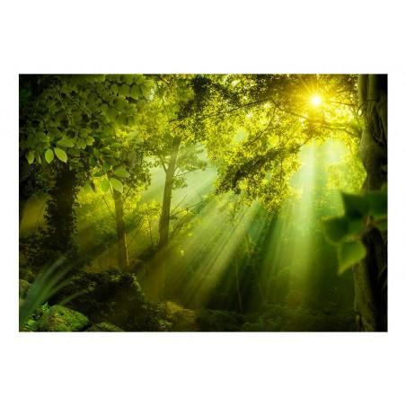Fotomurale - Nella foresta misteriosa - Quadri e decorazioni