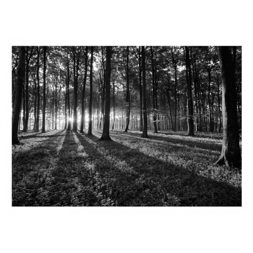 Fotomurale - The Light in the Forest - Quadri e decorazioni