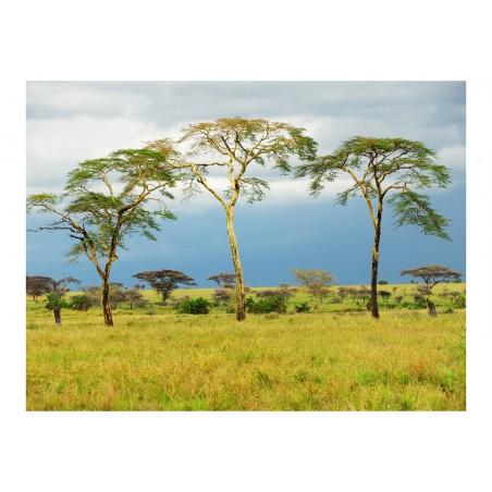 Fotomurale - Savanna trees - Quadri e decorazioni