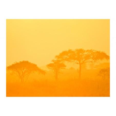 Fotomurale - Orange savanna - Quadri e decorazioni
