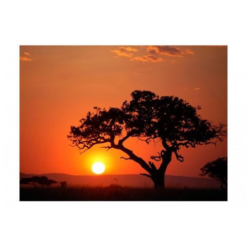 Fotomurale - Africa: tramonto - Quadri e decorazioni
