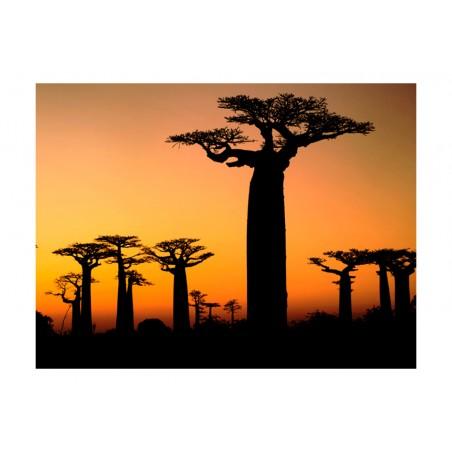 Fotomurale - Baobab africani - Quadri e decorazioni