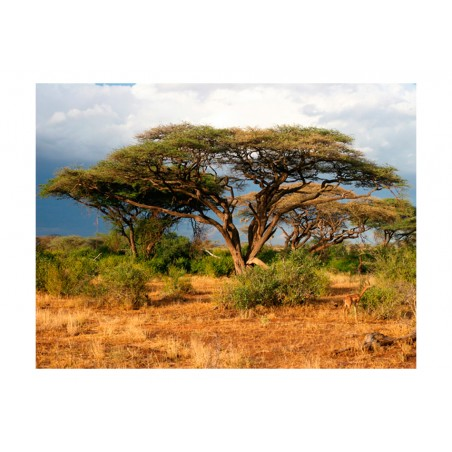 Fotomurale - Riserva Nazionale Samburu, Kenya - Quadri e decorazioni