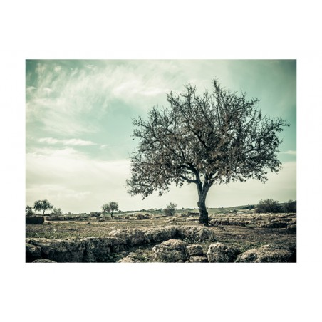 Fotomurale - albero - vintage - Quadri e decorazioni