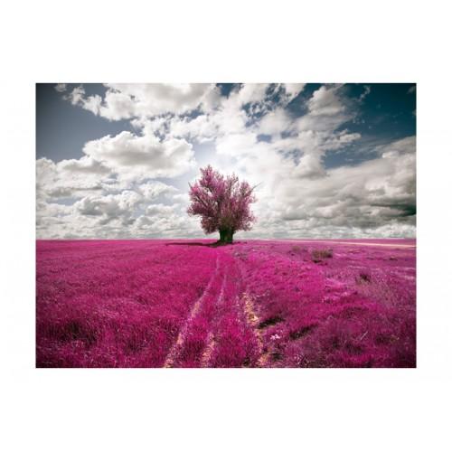 Fotomurale - Prato colore fuchsia - Quadri e decorazioni