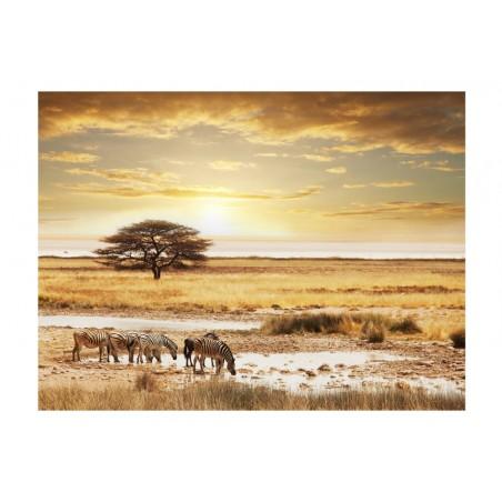 Fotomurale - Zebre africane presso l'acqua - Quadri e decorazioni