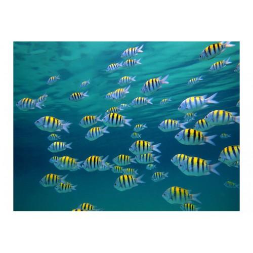 Fotomurale - Paesaggio sottomarino, Caraibi - Quadri e decorazioni