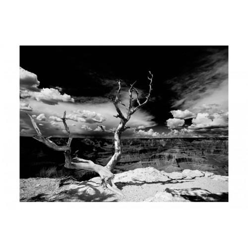 Fotomurale - Albero sullo sfondo del Grand Canyon, Arizona - Quadri e decorazioni