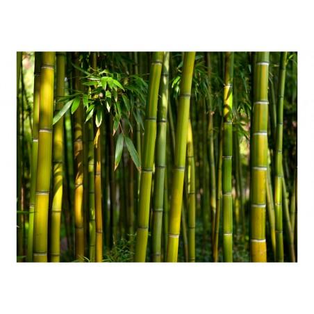 Fotomurale - Asiatica foresta di bambù - Quadri e decorazioni