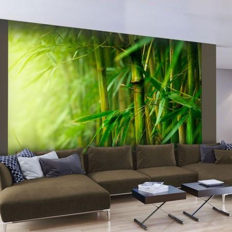 Fotomurale - giungla - bambù - Quadri e decorazioni