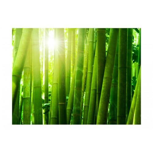 Fotomurale - Sole e bambù - Quadri e decorazioni