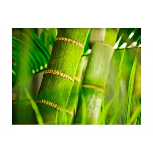 Fotomurale - bambù - dettaglio - Quadri e decorazioni