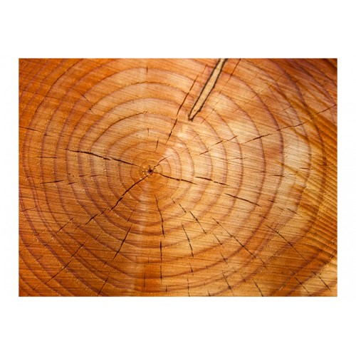 Fotomurale - Tronco d'albero con anelli annuali - Quadri e decorazioni