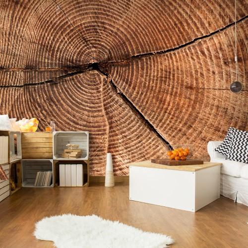 Fotomurale - Sezione trasversale di un tronco - Quadri e decorazioni