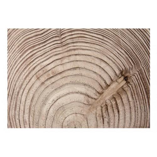Fotomurale - Cerchio d'albero - Quadri e decorazioni