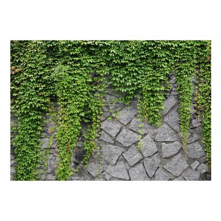 Fotomurale - Muro verde - Quadri e decorazioni