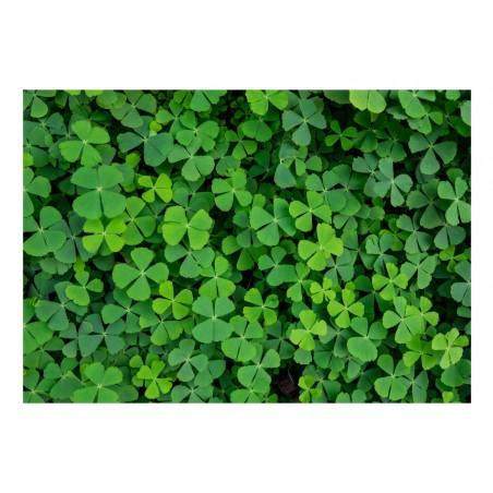 Fotomurale - Green Clover - Quadri e decorazioni
