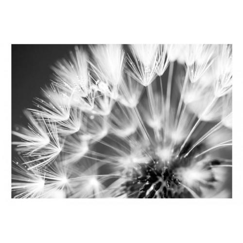 Fotomurale - Dandelion: Kiss of the Morning - Quadri e decorazioni