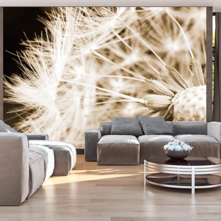 Fotomurale - Dandelion - sepia - Quadri e decorazioni