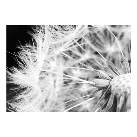 Fotomurale - Black and white dandelion - Quadri e decorazioni