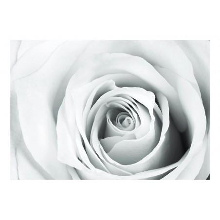 Fotomurale - Rose charade - Quadri e decorazioni