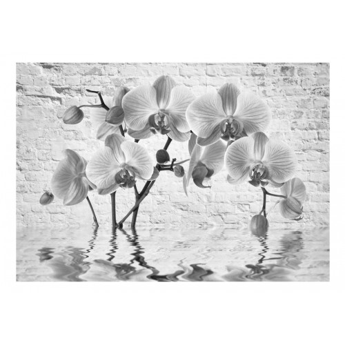 Fotomurale - Orchid in Shades of Gray - Quadri e decorazioni