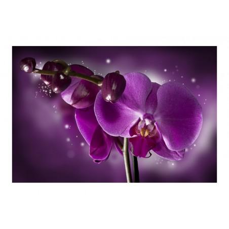Fotomurale - Favola e orchidea - Quadri e decorazioni