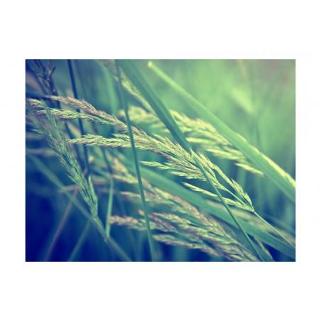 Fotomurale - Cereal field - Quadri e decorazioni