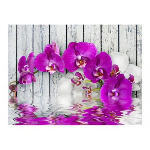 Fotomurale - Violet orchids with water reflexion - Quadri e decorazioni