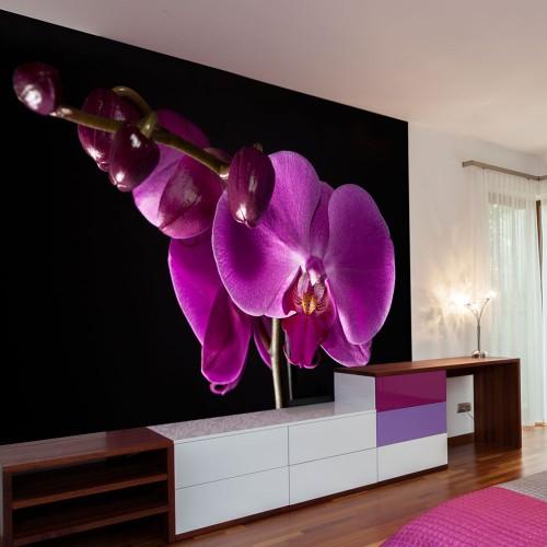 Fotomurale - elegante orchidea - Quadri e decorazioni