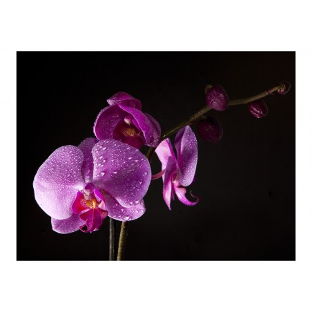 Fotomurale - di buon gusto orchidea - Quadri e decorazioni