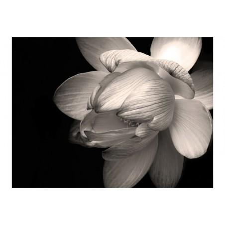 Fotomurale - Fiore di loto - Quadri e decorazioni