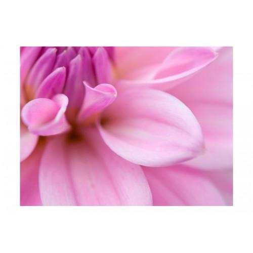 Fotomurale - Petali di dalia - Quadri e decorazioni