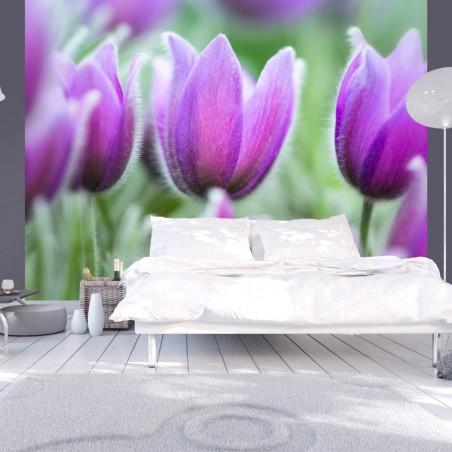 Fotomurale - Primaverili tulipani viola - Quadri e decorazioni