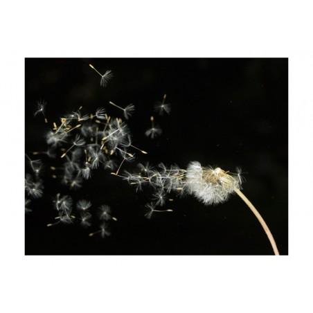 Fotomurale - Semi di un soffione trasportati dal vento... - Quadri e decorazioni