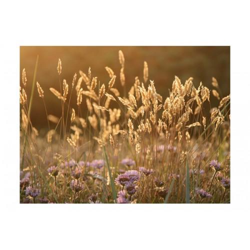 Fotomurale - Awakening ceral field - Quadri e decorazioni