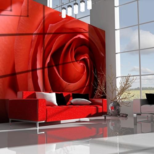 Fotomurale - Risveglio di una rosa - Quadri e decorazioni